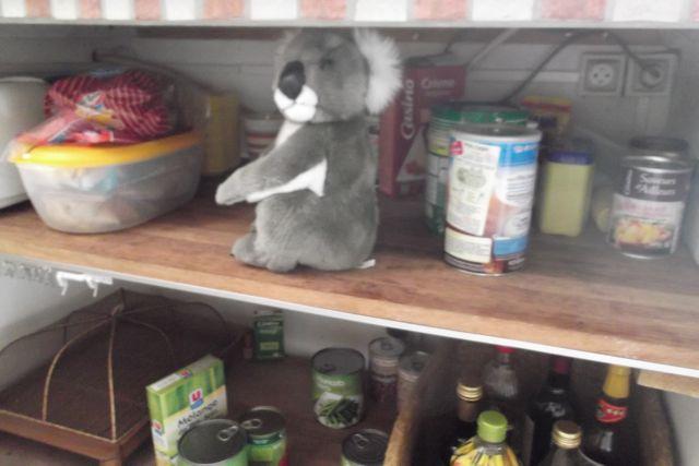 Mais que fait le koala dans le rayon nourriture!?