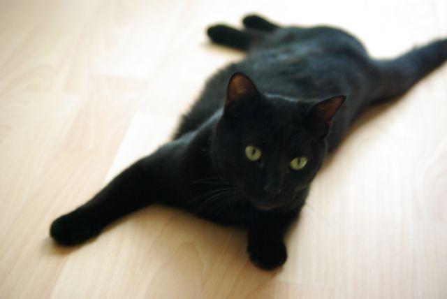 Mon chat Babou
