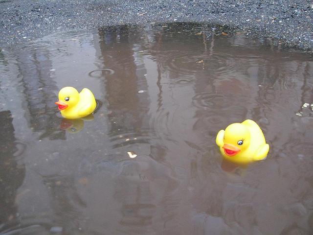 Les flaques d'eau c'est rigolo, même sans canards!