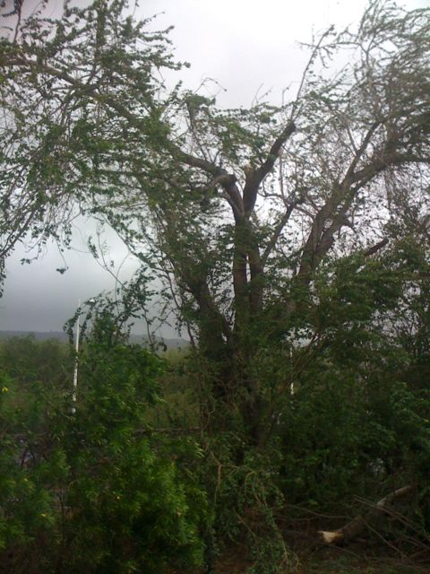 L'arbre devant chez nous s'est fendu en deux, tout est tombé dans la rue, où nous avons l'habitude de garer la voiture