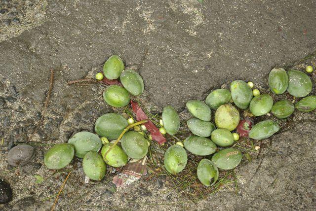 photo-passage-dumile-fruits-tombes