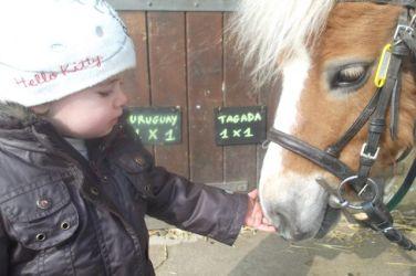 bebe-caresse-poney