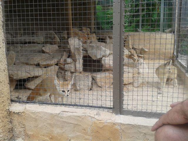 parc-animalier-zoa2