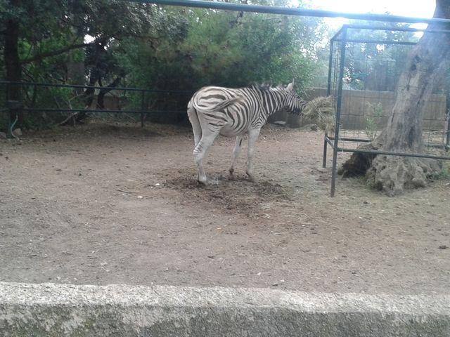 parc-animalier-zoa3