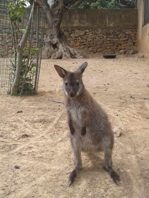 parc-animalier-zoa4