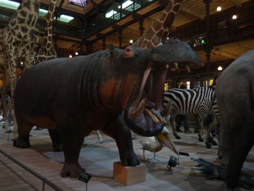 visite-museumhistoirenaturelle