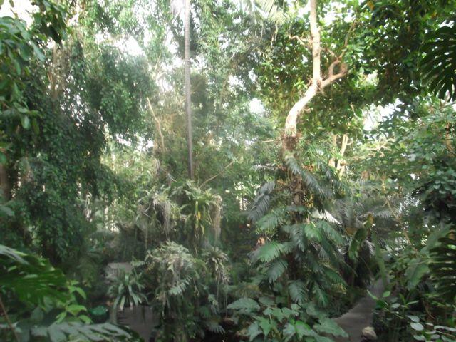 serres-jardin-plantes