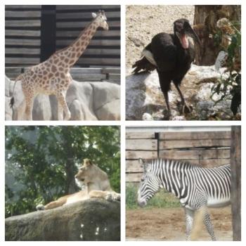 working mum visite le parc zoologique de paris