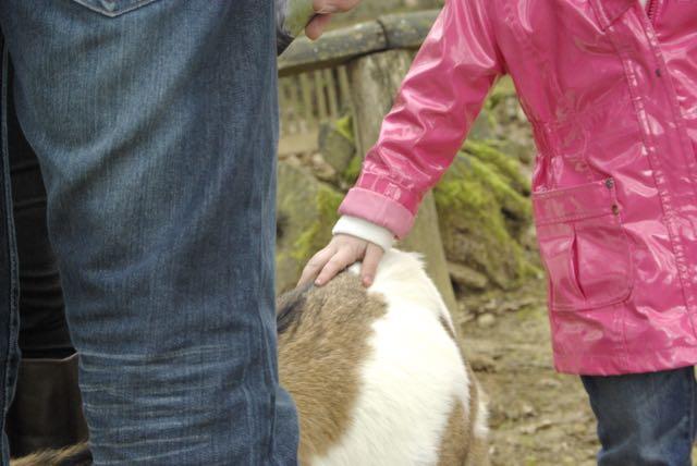 vallee-singes chèvre mini ferme